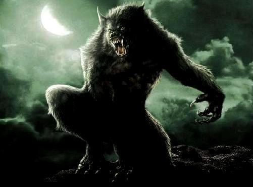 highlandwolf Index du Forum