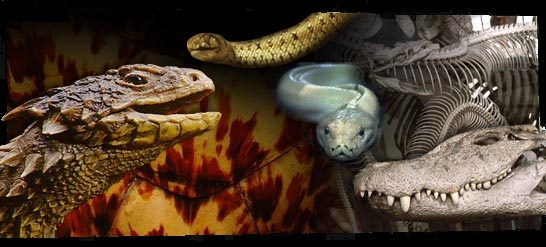 loiret-reptile Index du Forum