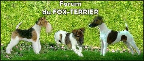 Forum du fox-terrier Index du Forum