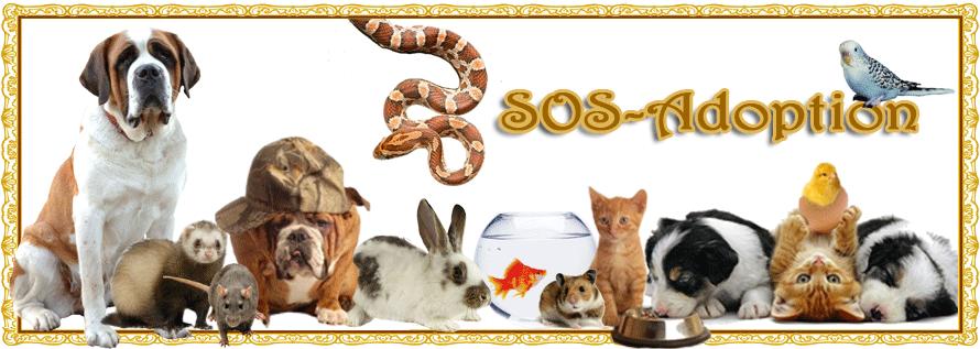 SOS-ADOPTION Index du Forum